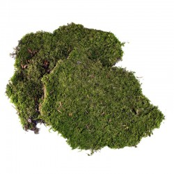 ROSSI ROSA Muschio naturale a tappeto 60 gr