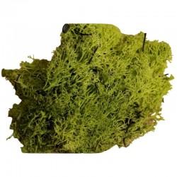 ROSSI ROSA Muschio lichene verde 100 gr.