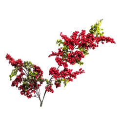 XONE Mini berry spray 65 cm