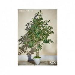 ENZO DE GASPERI Ficus beniamin con vaso pvc h183cm