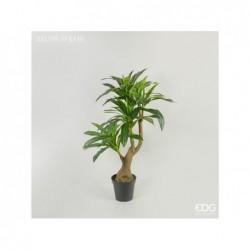 ENZO DE GASPERI Dracena chic con vaso pvc h140cm green