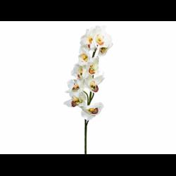 XONE Cymbidium spray con 10 fiori cm78 crema