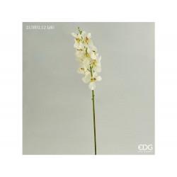 ENZO DE GASPERI Orchidea vanda eden bianca h80cm