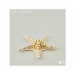 ENZO DE GASPERI Stella marina cm. 16-20 bianco 6pz