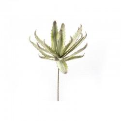 MERCURY Ramo Grande Agave Maculata